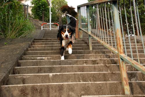 階段だって♪